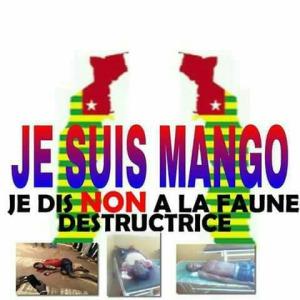 Togo Mango 4